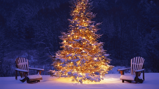 New_year_tree_in_a_middle_of_the_forest_050566_